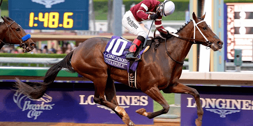 horse running in the Breeders' cup Distaff